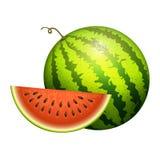 O verde suculento realístico da fatia da ilustração do vetor da melancia listrada madura isolou o melão maduro ilustração do vetor
