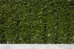 O verde vertical do jardim deixa a parede Imagem de Stock