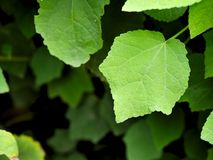 O verde vibrante brilhante sae com a sala para que o espaço da cópia use-se para fundos ou bandeiras Imagens de Stock
