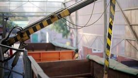 O verificador da ponta de prova mergulha no reboque do caminhão para recolher o trigo para a análise da qualidade Sistema de cont filme