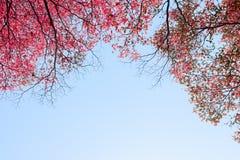 O vermelho bonito deixa árvores no fundo do céu Fotografia de Stock Royalty Free
