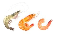 O vermelho cozinhou o camarão do camarão ou do tigre isolado no fundo branco imagem de stock royalty free