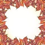 O vermelho das uvas da aquarela deixa o quadro quadrado Imagens de Stock