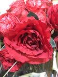 O vermelho de florescência levantou-se Imagens de Stock