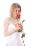 O vermelho do cheiro da noiva levantou-se Fotografia de Stock