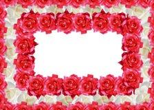 O vermelho e o branco levantaram-se Imagem de Stock Royalty Free