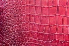 O vermelho escala o fundo exótico macro, gravado sob a pele de um réptil, crocodilo Close-up do couro genuíno da textura imagem de stock