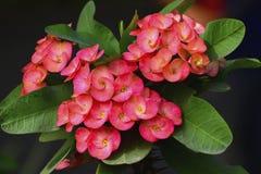 O vermelho floresce a fotografia do fundo Fotos de Stock Royalty Free