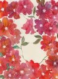 O vermelho floresce o fundo Imagens de Stock Royalty Free