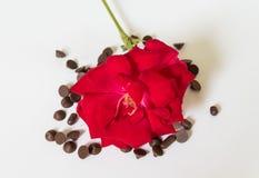 O vermelho levantou-se com chocolate Foto de Stock Royalty Free