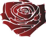 O vermelho levantou-se com gotas da água Fotografia de Stock Royalty Free