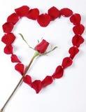 O vermelho levantou-se dentro das pétalas cor-de-rosa na forma do coração Imagem de Stock Royalty Free