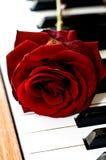 O vermelho levantou-se dentro no piano Fotos de Stock Royalty Free