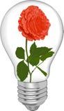 O vermelho levantou-se em um bulbo Imagens de Stock Royalty Free