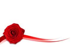 O vermelho levantou-se no fundo branco Fotografia de Stock Royalty Free