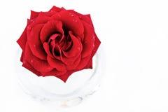 O vermelho levantou-se no vaso gorizontal Imagens de Stock Royalty Free