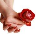 O vermelho levantou-se para as mãos fêmeas Imagem de Stock