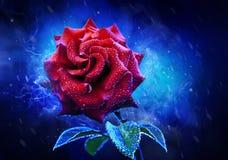 O vermelho Mystical levantou-se Foto de Stock Royalty Free