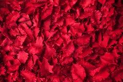 O vermelho secado floresce o fundo do pot-pourri da aromaterapia fotos de stock