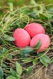 O vermelho três coloriu ovos da páscoa tradicionais no ninho real da grama Imagens de Stock