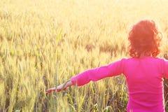 O verso da criança feliz que olha o por do sol no campo de trigo, explora e aventura-se o conceito imagens de stock