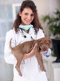 O veterinário que abraça e acalma o cão Fotografia de Stock