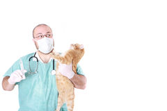 O veterynary Imagens de Stock Royalty Free