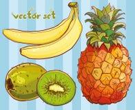 O vetor ajustou-se com banana, quivi, abacaxi Imagem de Stock Royalty Free