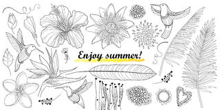 O vetor ajustou-se com os reginae do colibri ou do Colibri e do strelitzia do esboço, o hibiscus, o plumeria, o passiflora e a fo ilustração do vetor
