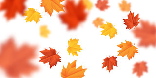 O vetor borrou as folhas de queda com vento no fundo branco Foto de Stock