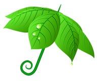 O vetor folheia guarda-chuva. Fotos de Stock Royalty Free
