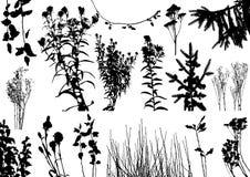 O vetor planta silhuetas Foto de Stock