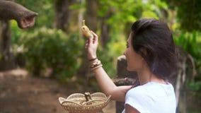 O viajante da moça alimenta o elefante filme
