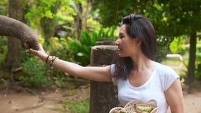 O viajante feliz da mulher alimenta o elefante filme