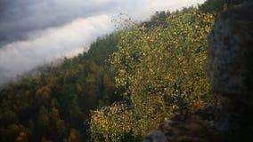 O vidoeiro brilhante do outono sae em um ramo que vibra no vento vídeos de arquivo