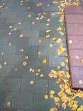 O vidoeiro caído amarelo sae em uma estrada asfaltada imagem de stock royalty free
