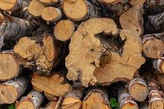 O vidoeiro dos logs da separação do fundo dobrou materiais naturais do teste padrão marrom dos logs da extremidade de pilha foto de stock royalty free