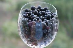 O vidro de vinho romântico encheu-se com as bagas selvagens, mirtilos contra um fundo da natureza verde Imagem de Stock