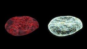 O VIH e a pilha do tumor DÃO LAÇOS com alfa, metragem conservada em estoque ilustração royalty free