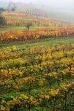 O vinhedo da queda em Moravia Foto de Stock