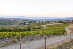 O vinhedo do Chianti foto de stock royalty free