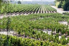 O vinhedo em Santiago faz o Chile fotografia de stock