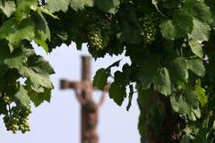 O vinho é religião Foto de Stock Royalty Free