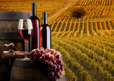 O vinho Imagens de Stock