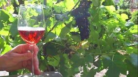 O vinho de Rosa pode ser derramado em um vidro contra um fundo do vinhedo vídeos de arquivo
