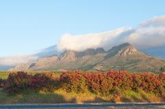 O vinho de Stellenbosch aterra a região perto de Cape Town. Fotografia de Stock Royalty Free