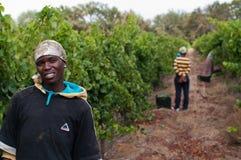 O vinho de Stellenbosch aterra a região perto de Cape Town. Fotos de Stock