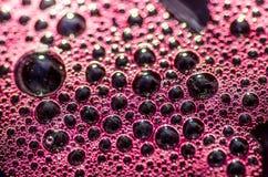 O vinho tinto das boas uvas é fermentado Imagens de Stock Royalty Free
