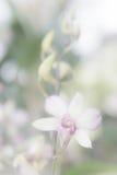 O vintage branco da orquídea das flores e o vintage branco do filtro denominam para trás Fotografia de Stock