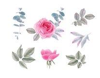 O vintage da aquarela aumentou flores e folhas ilustração royalty free